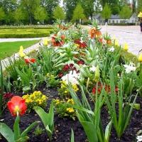 02-im-park-bluhten-die-fruhlingsblumen